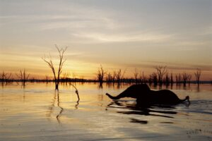 Read more about the article Lake Kariba water level recedes